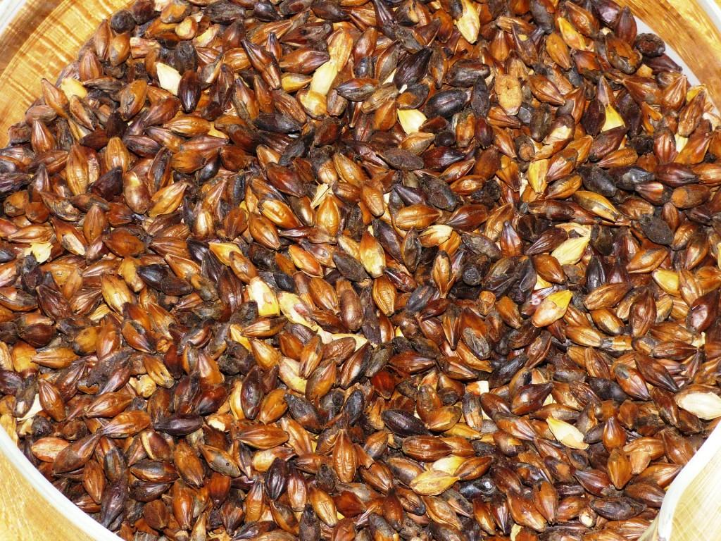 Granos de cereal germinados